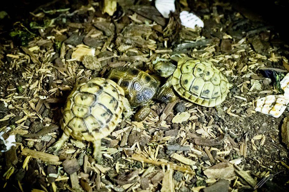 Schildkröten unter sich