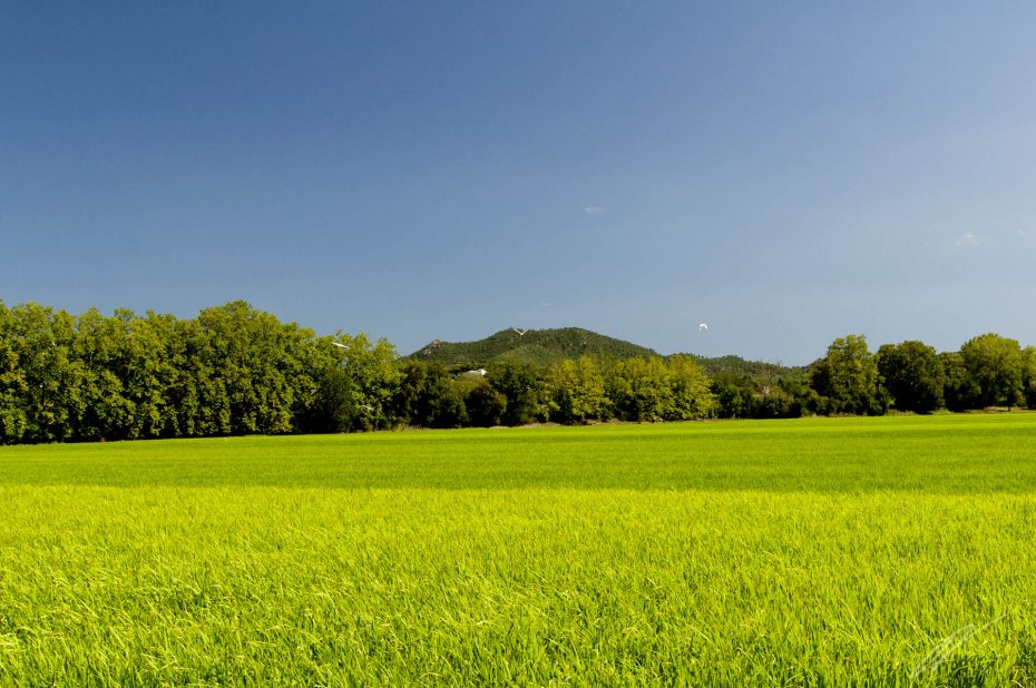 Reisfelder, Spanien