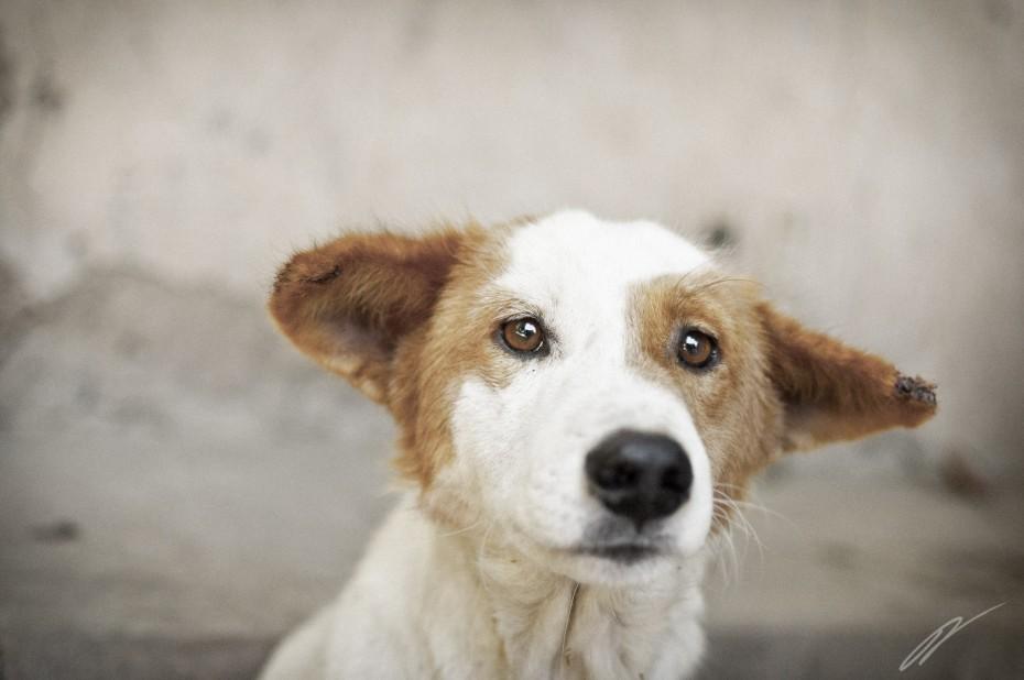 Ein süßes Hundebild